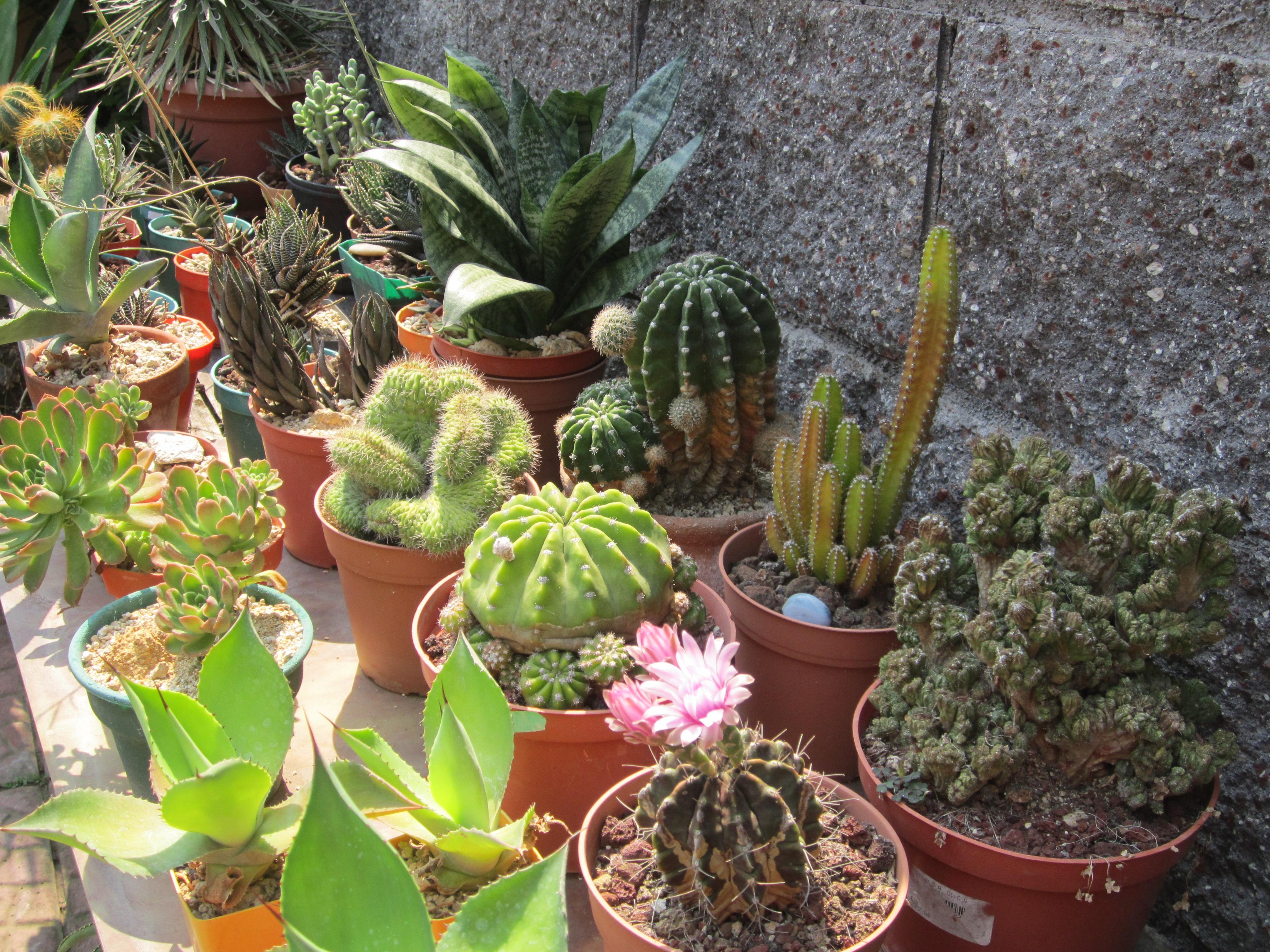 Clima y riego para cactus y suculentas en el salvador for Cactus y suculentas