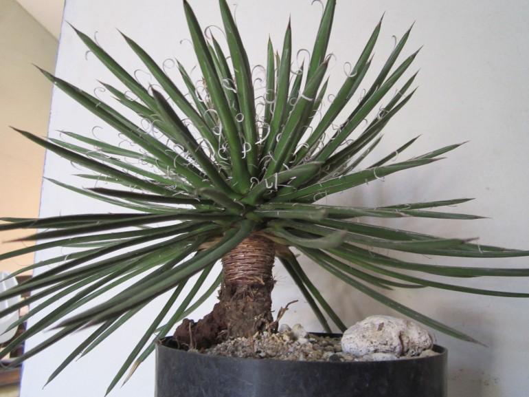 Desertica-Cactus El Salvador